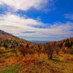 Autumn Splendor in Virginia