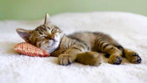 Cat Nap-tastic Ideas