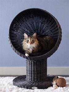 Harrisonburg Apartment Cat Furniture