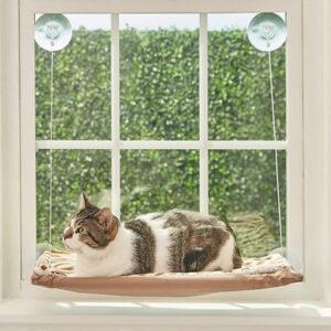 Harrisonburg Apartment Cat Perch