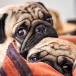 Pet Perfect: Be a Great Pet Parent & Neighbor