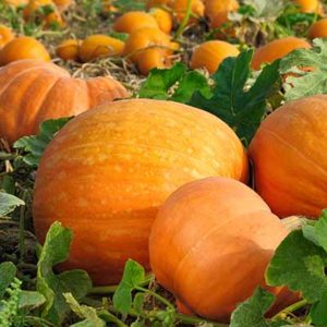 Fall into Fun: Autumn in Harrisonburg